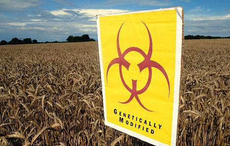 Ogm: calano le coltivazioni in Europa. Lo conferma il rapporto Iaaa