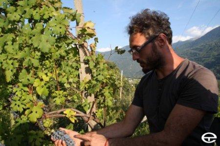 """""""Ritorno in Valtellina per dedicarmi alla viticoltura eroica, camminando controvento"""""""