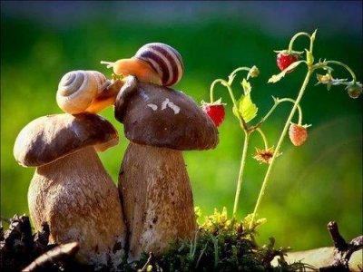 L'amore non può essere contro natura