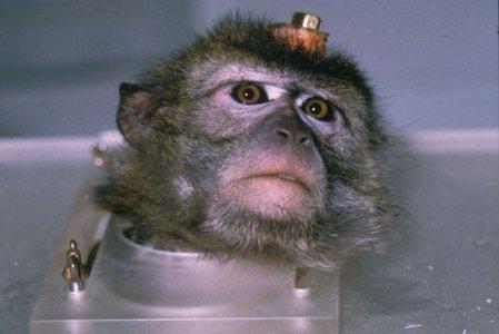Stop alla vivisezione, pronta una nuova mobilitazione