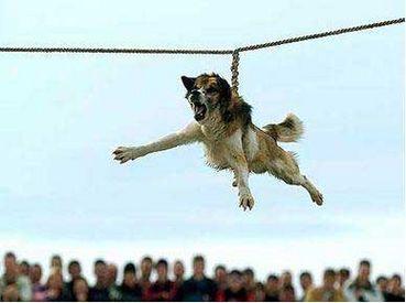 Dog spinning, cosa fare per fermare il brutale rituale bulgaro