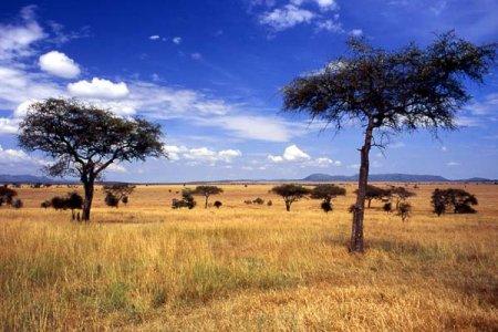 Tanzania: il Serengeti rischia di essere spaccato in due