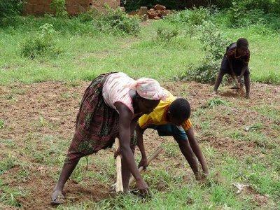 L'agroecologia potrebbe raddoppiare la produzione di cibo