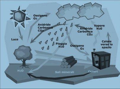 Energia per il futuro: considerazioni sulle biomasse a uso energetico
