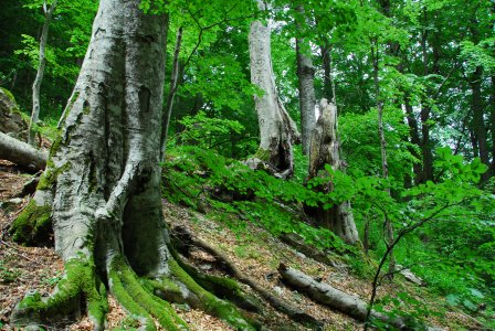 Difendiamo i nostri boschi
