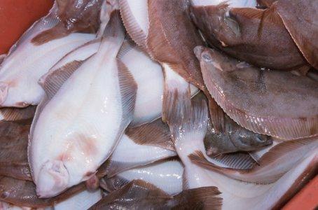 Coldiretti, pesce dal Giappone: controlli fai da te dell'etichetta