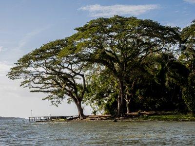 I grandi alberi e la poesia del Nicaragua