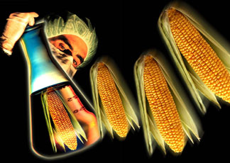 Ogm: la Corte di Giustizia europea dà ragione alla Monsanto