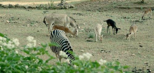 La Lav a Semproniano: «Ridiamo una speranza agli animali vittima dell'uomo»