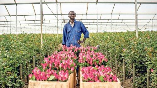 Non comprate fiori stranieri
