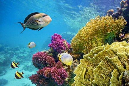 Le barriere coralline non ce la faranno