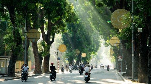 Piantiamo alberi in città: è importantissimo. E vi spieghiamo perché