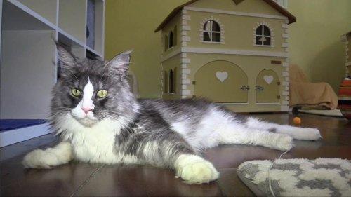 Meno immigrati e più hotel a 5 stelle per i gatti...