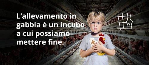 Stop agli animali allevati in gabbia: partita la raccolta di firme