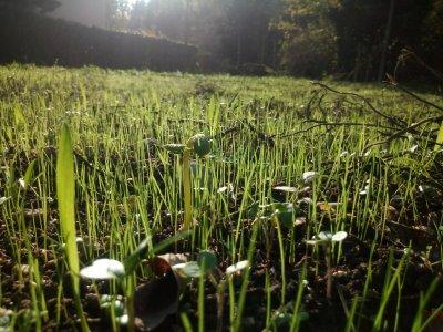 Entroterra, il progetto di agricoltura sociale che si apre al disagio psichico