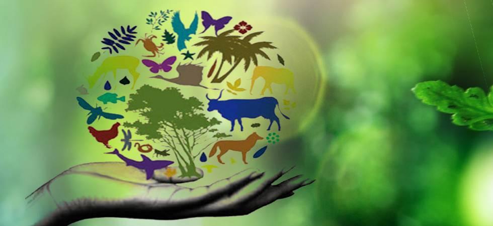 Giornata della biodiversità: in Italia scomparsi i tre quarti dei frutti