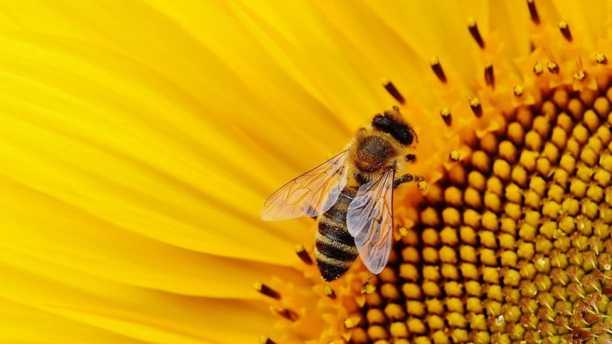 «I pesticidi continuano a uccidere le api. È ora di agire veramente»