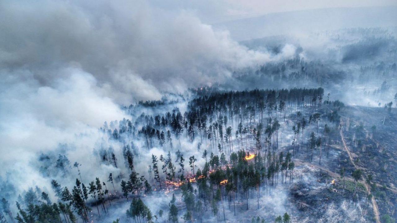Overshootday, Siberia in fiamme, Amazzonia devastata: siamo al suicidio dell'umanità?