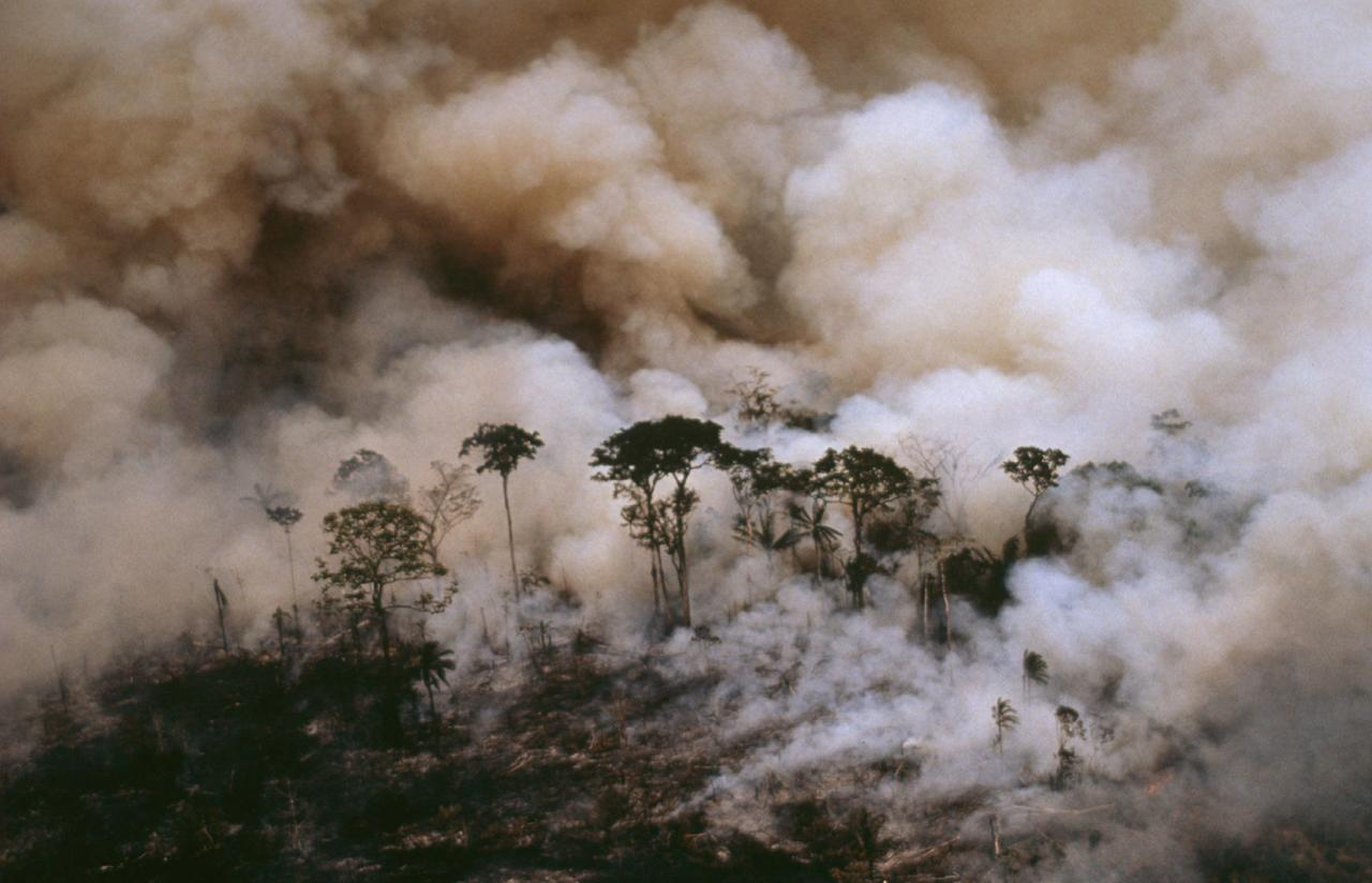 Contro la distruzione dell'Amazzonia, boicottare i killer del pianeta