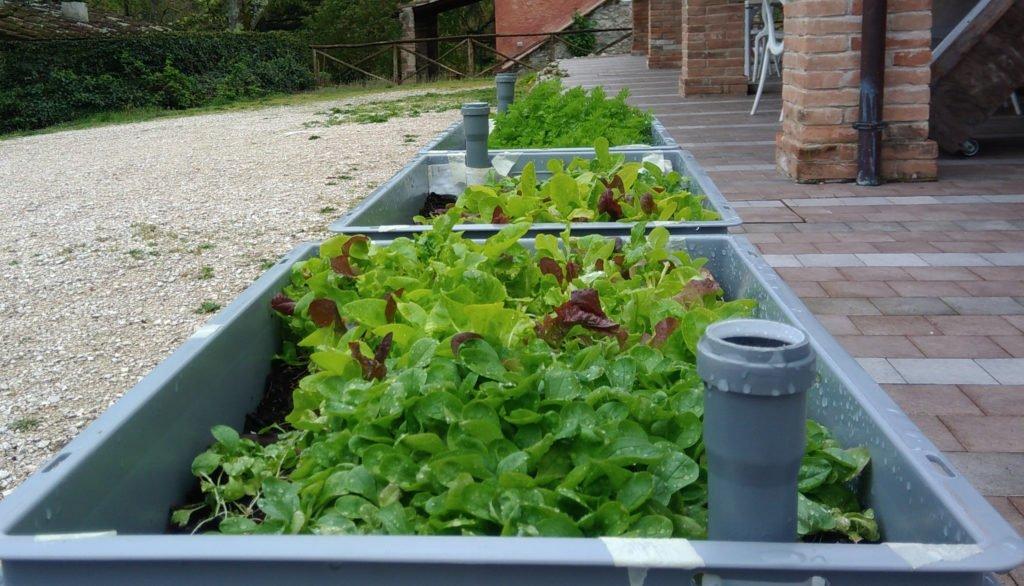 Orti auto irriganti e a basso consumo di acqua: le nuove frontiere dell'agricoltura