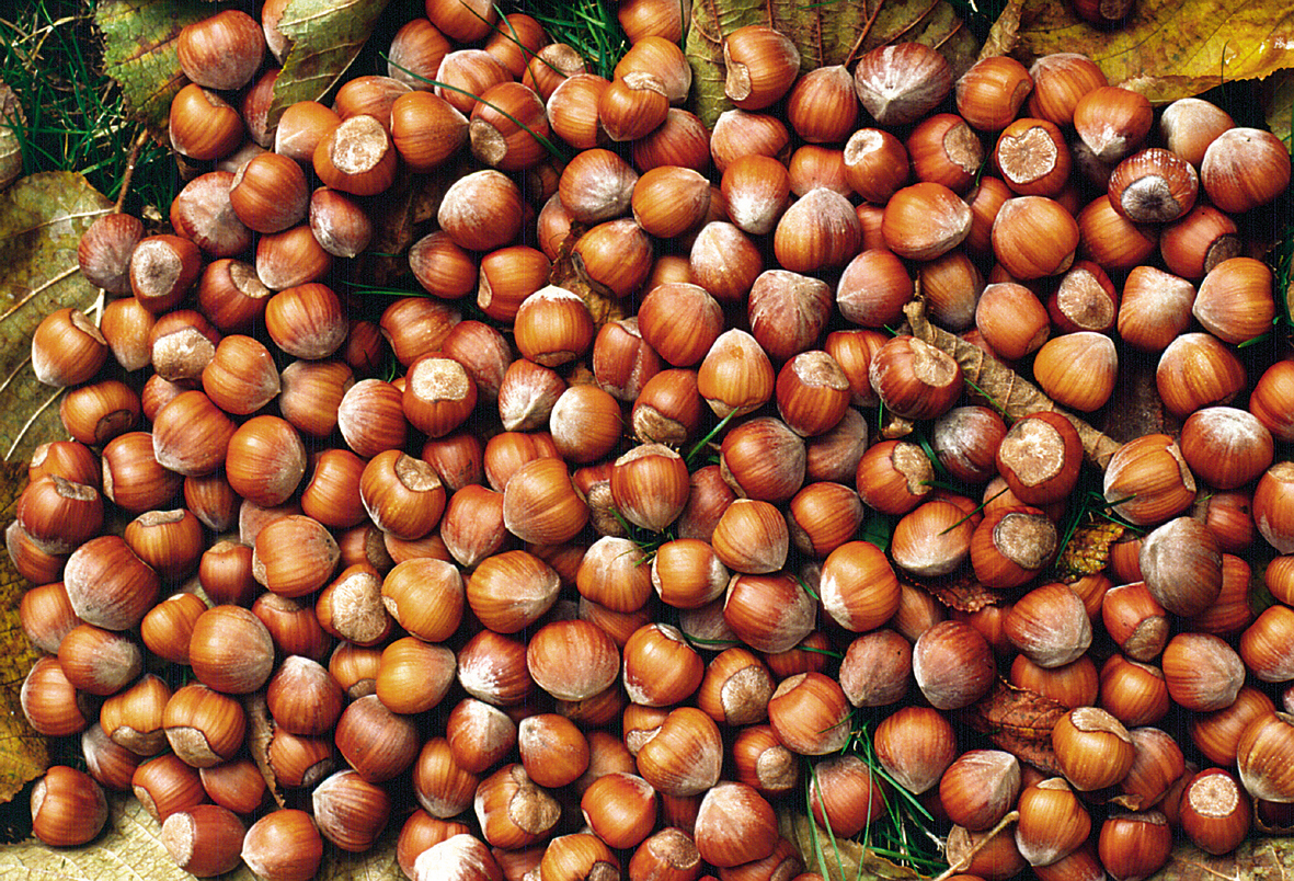 Nocciole e pesticidi: basta con le coltivazioni intensive