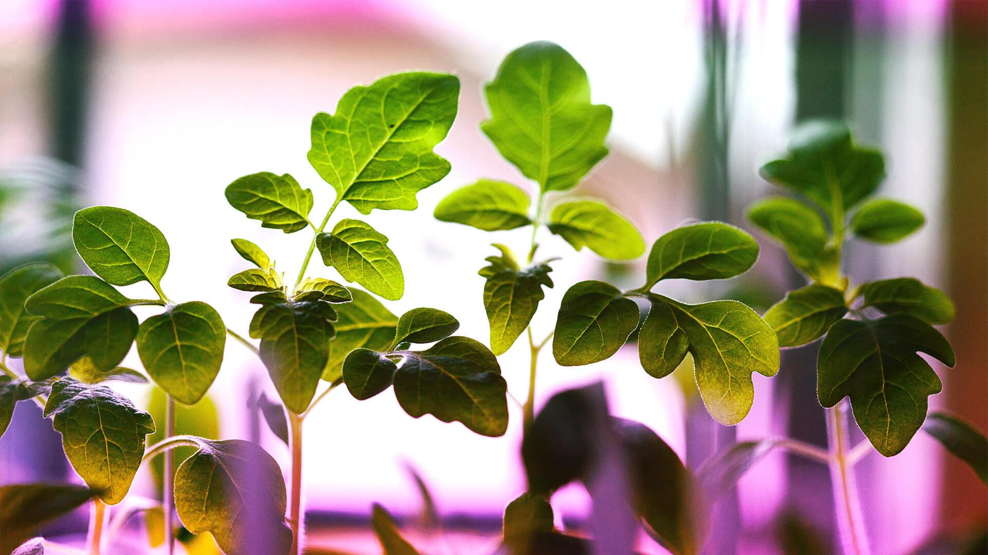 Agricoltura indoor: come coltivarsi il cibo anche senza spazi esterni
