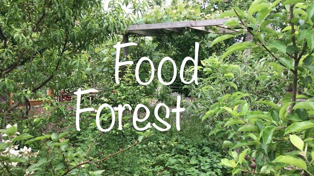 Facciamo dell'Italia un paradiso di foresta, orto, giardino commestibile