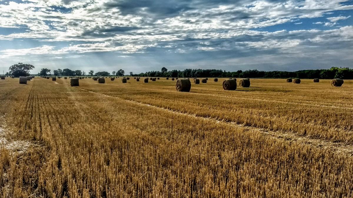 #CambiamoAgricoltura: «Italia delude, nessun impegno serio e tante contraddizioni»