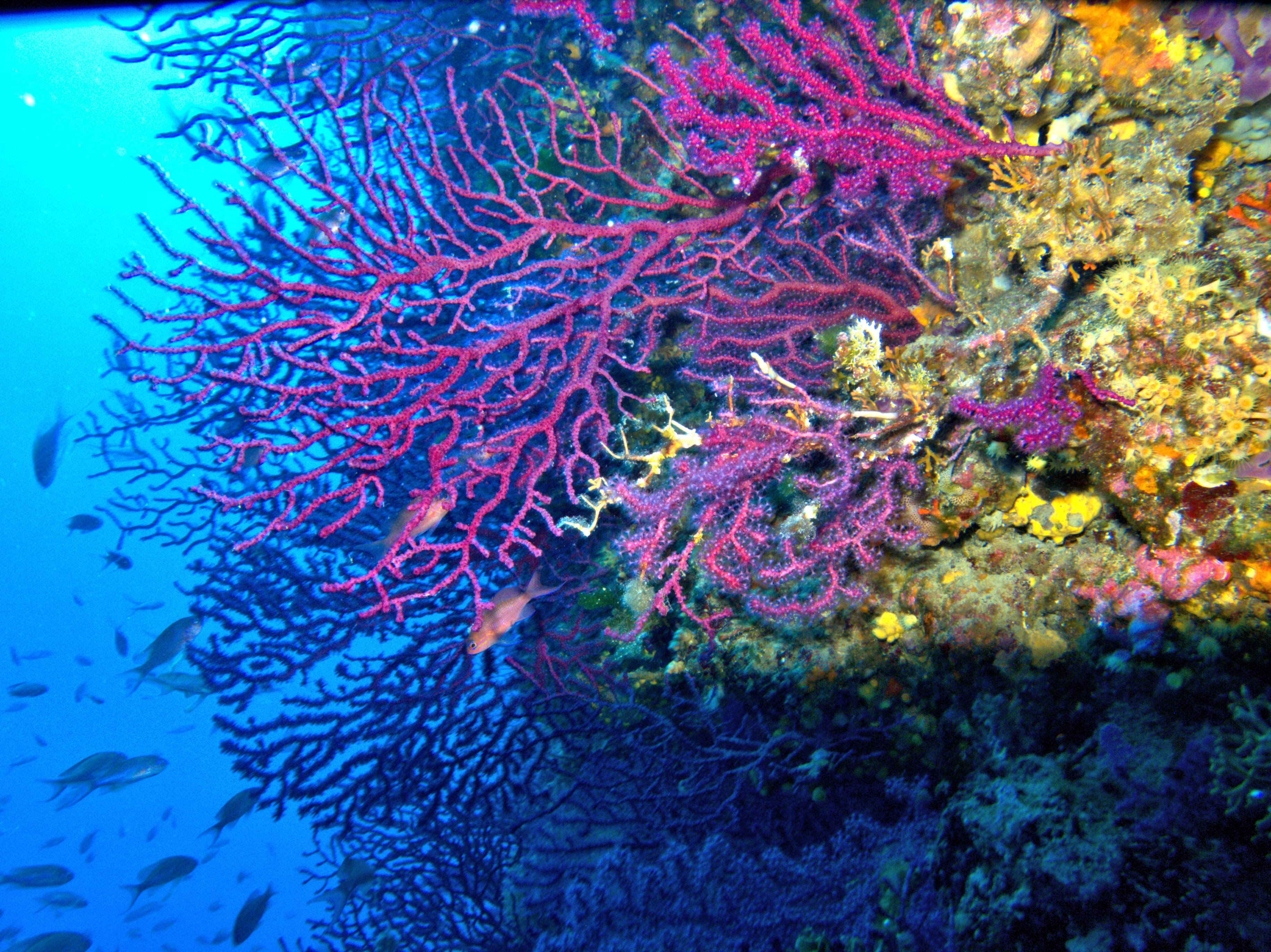 Mediterraneo, mille specie aliene devastano l'equilibrio del nostro mare