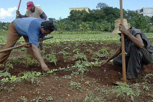 A Cuba una rivoluzione agroecologica per l'autosufficienza alimentare