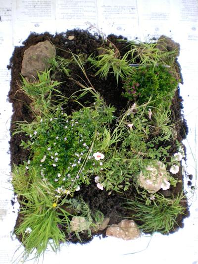 Talee, un progetto di propagazione dei libri e delle piante