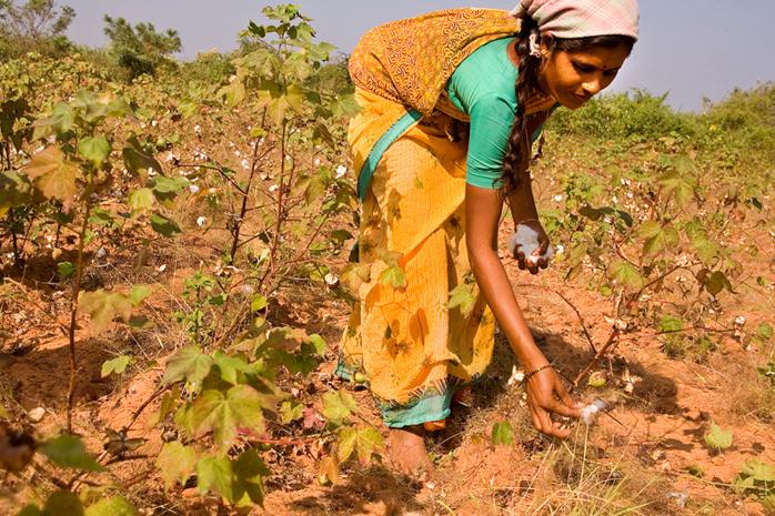 India, ogni 30 minuti un contadino si suicida