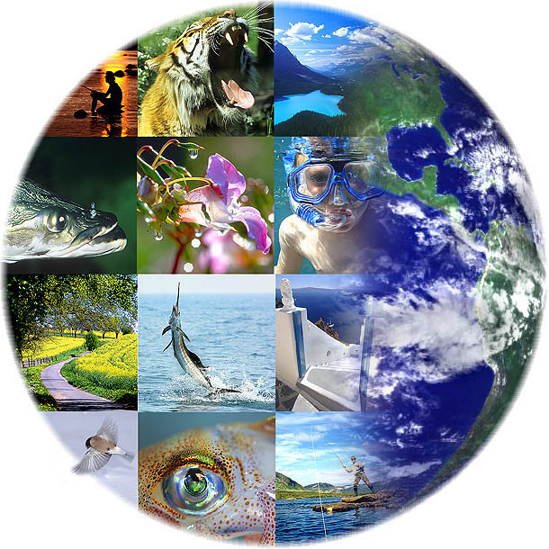 Biodiversità a rischio, colpa anche dei cambiamenti climatici
