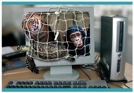 Internet e il commercio illegale delle specie in via di estinzione