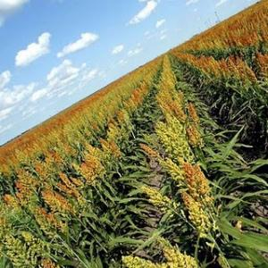 Dal Tar del Lazio via libera alle coltivazioni Ogm