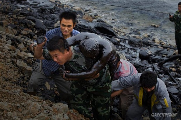 Disastri ecologici: in Cina un'altra marea nera