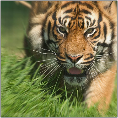 Video shock di Greenpeace: la deforestazione che uccide