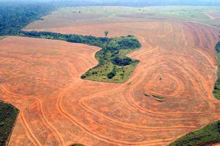 Deforestazione: le azioni possibili, prima che sia troppo tardi