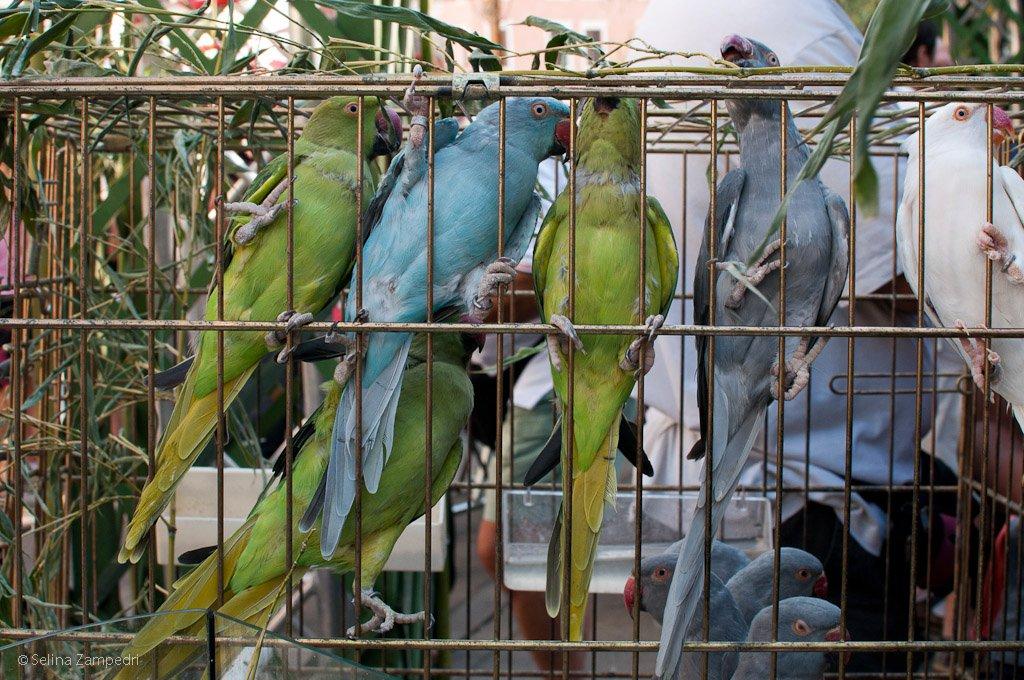 Calendario Fiere Ornitologiche.Sacile In Tanti A Manifestare Contro La Fiera Ornitologica