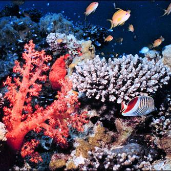 'Our Dying Planet': barriere coralline a rischio estinzione