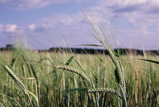 Riforma della Politica Agricola Comune, Lipu: