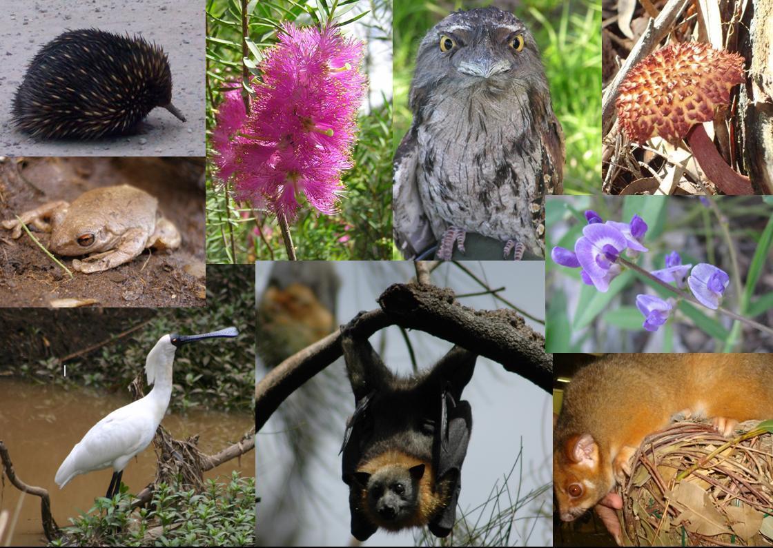 Biodiversità. Iucn: 25% dei mammiferi a rischio estinzione