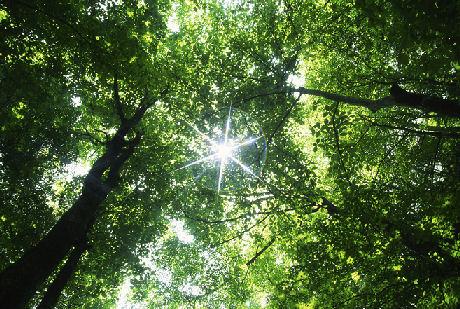 Foreste tropicali: molte specie potrebbero estinguersi entro il 2100