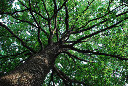 Gli alberi come maestri nei libri di Anna Cassarino