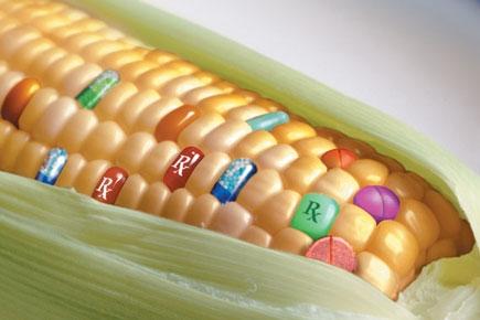 OGM: la Cina respinge mais Usa contaminato