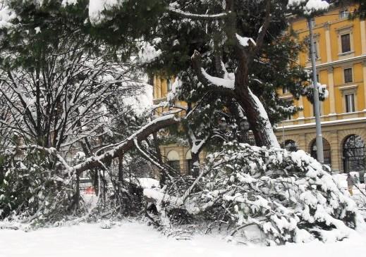 Legno: per la legge italiana quello delle aree verdi urbane è un rifiuto