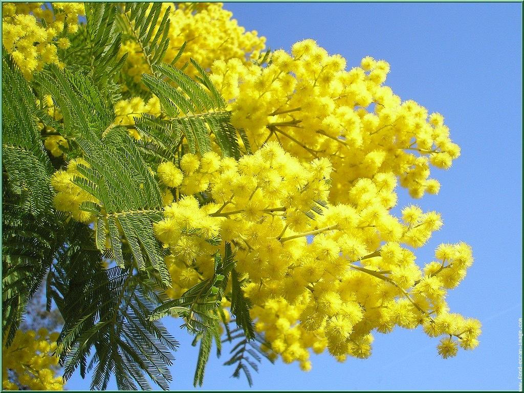 8 marzo. Lasciamo in pace mimose e plastica