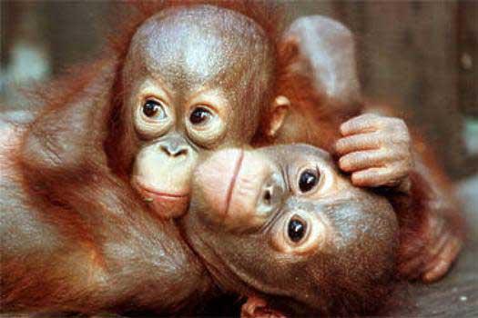 Delitti animali. Sentenza storica: sanzionabili senza distinzione di specie