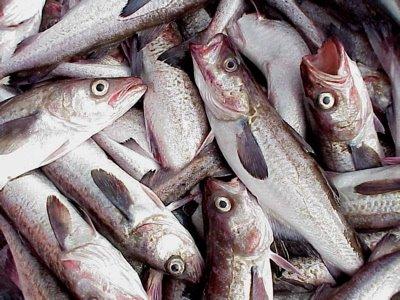 Quando abbocca l'ambientalista: la favola della pesca sostenibile