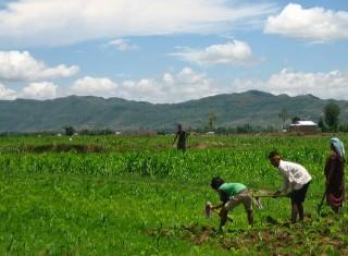 Contadini del mondo in lotta contro il land grabbing. 250 le iniziative